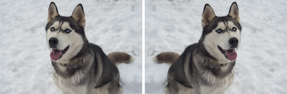 Original image of a dog on the left, horizontally flipped image about centre on the right (Source)