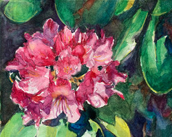 Radiant Rhododendron
