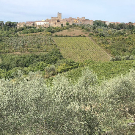 What we can Learn about Taking the Long View from Chianti Olive Trees