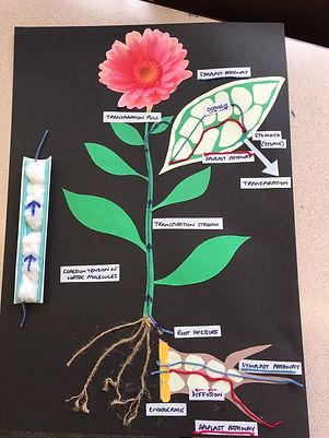 flower botany.JPG