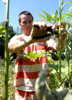 0919 Calhoun County Inmate garden005