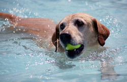 UA Dog Splash 2014113.JPG