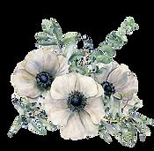 99944526-watercolor-white-anemone-bouque