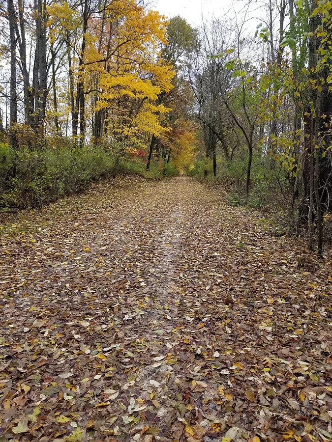 trail.1.jpg