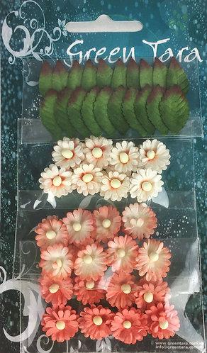 Peach Mimosas & Leaves