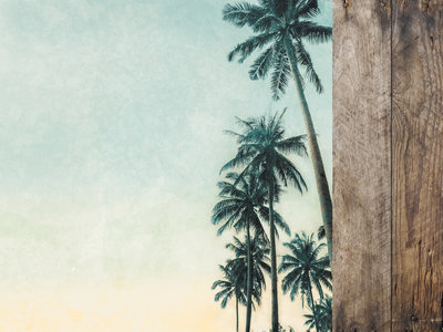 Palm Trees - Paradise Found Collection