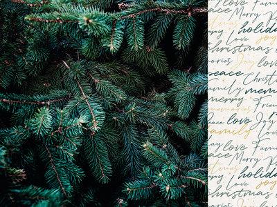 Evergreen Emerald Eve
