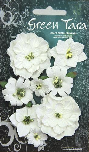 White Fantasy Blooms