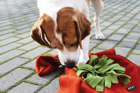 Knauder's Best Sniff Star (Sniff and Search Game for Dogs)