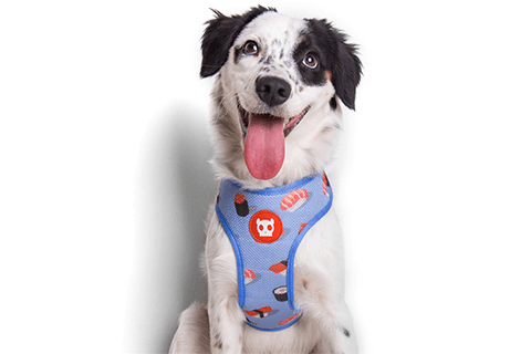Zee.Dog Air Mesh Plus Harness