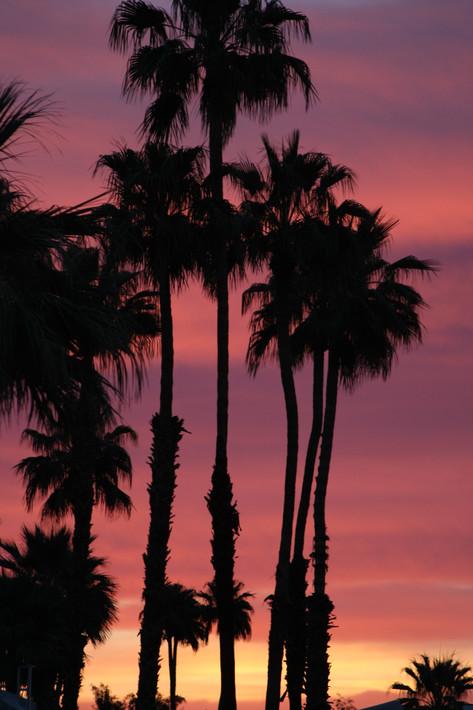 Sunrise - Purple