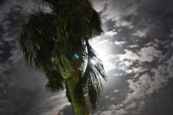 Palm Springs Moonlight