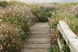 Cambira Boardwalk - Flowers