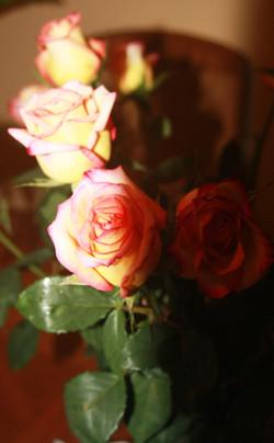 Light & Dark Roses