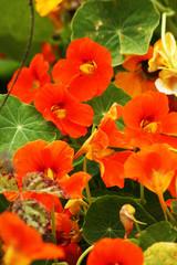 Flowers near Cambria