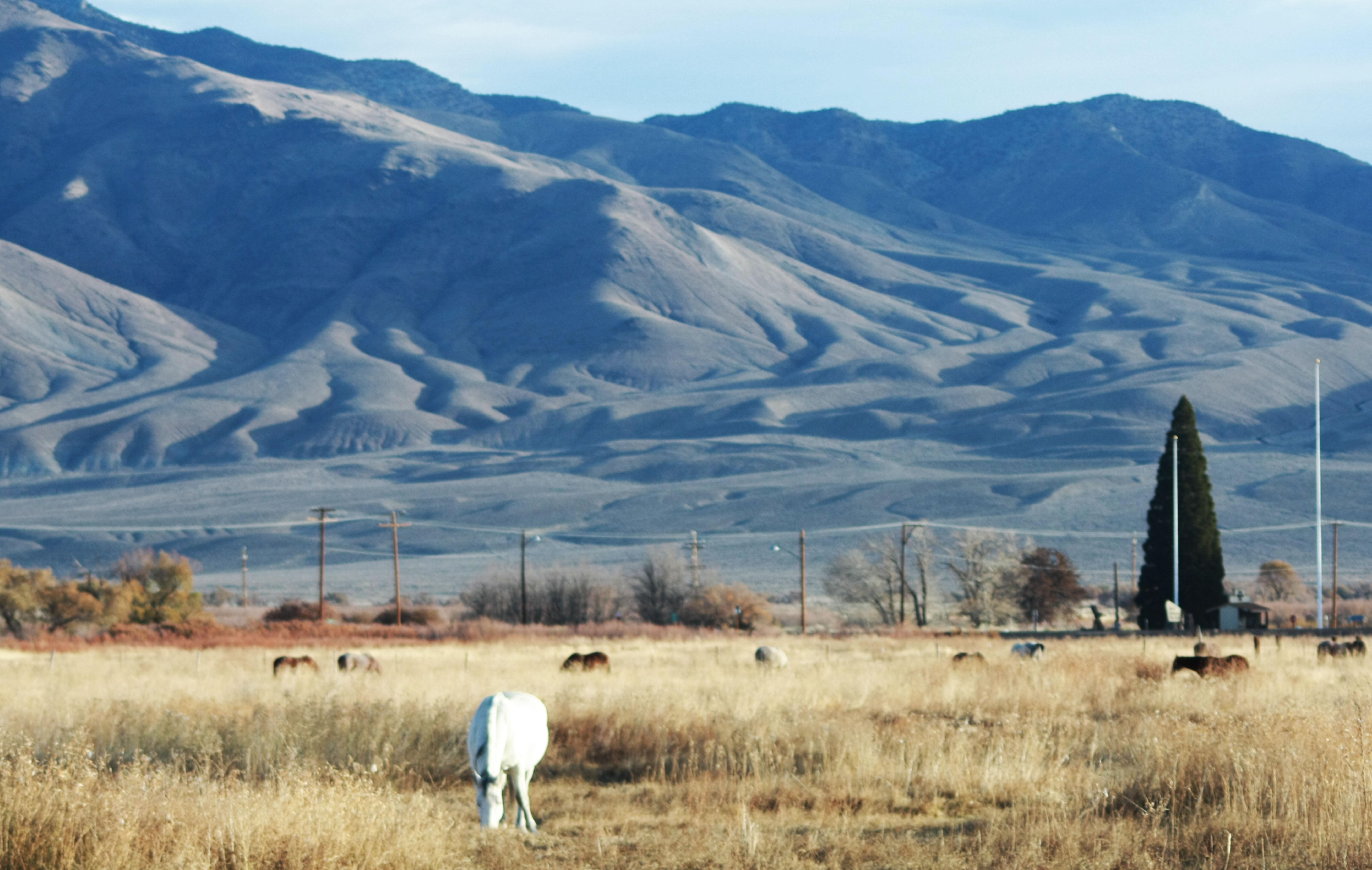 Horse Ranch - Big Pine, CA