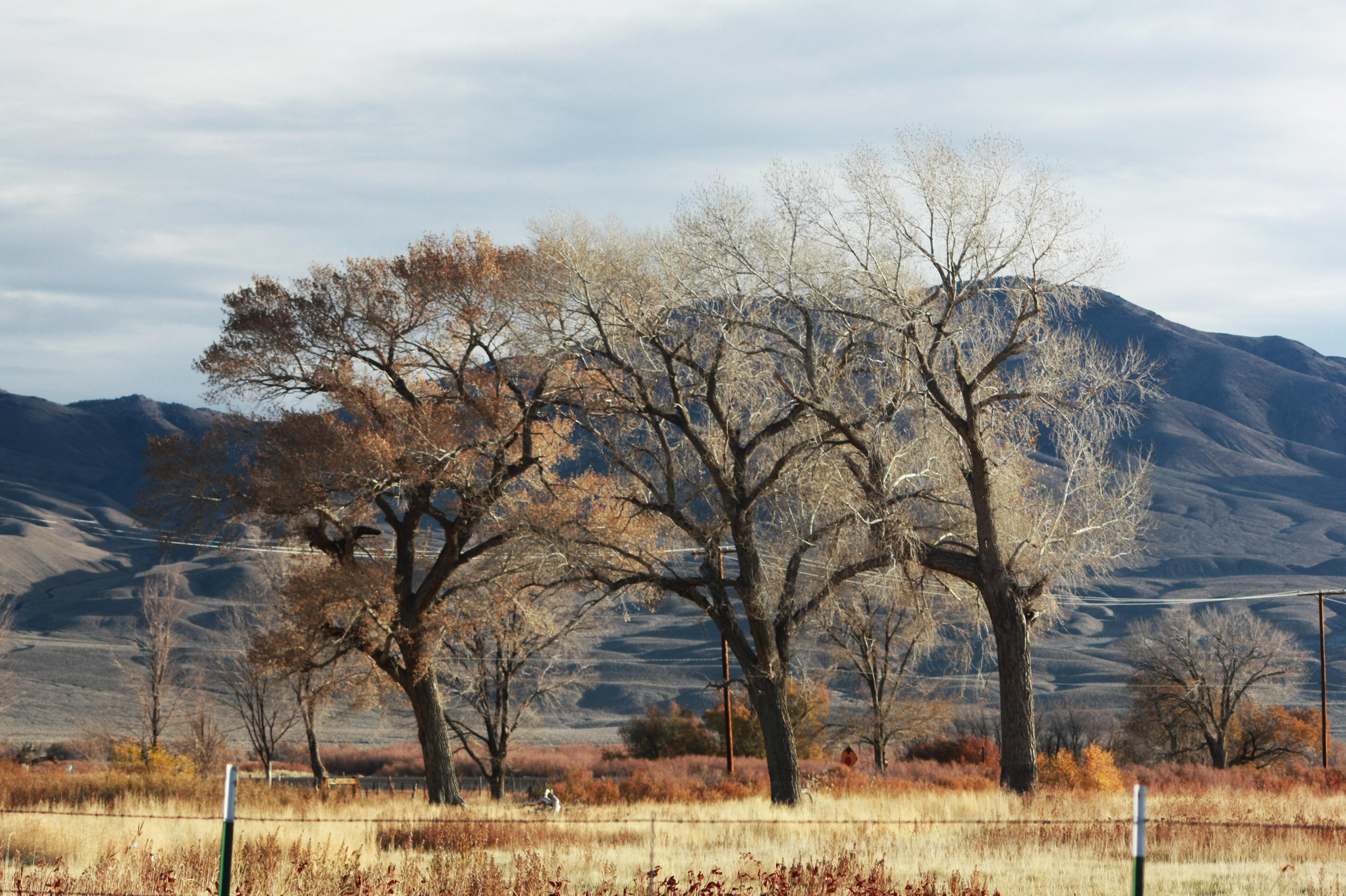 Fall Trees - White Mountais