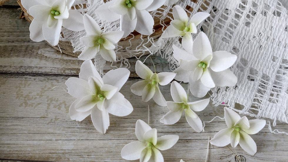 Hydrangeas, White