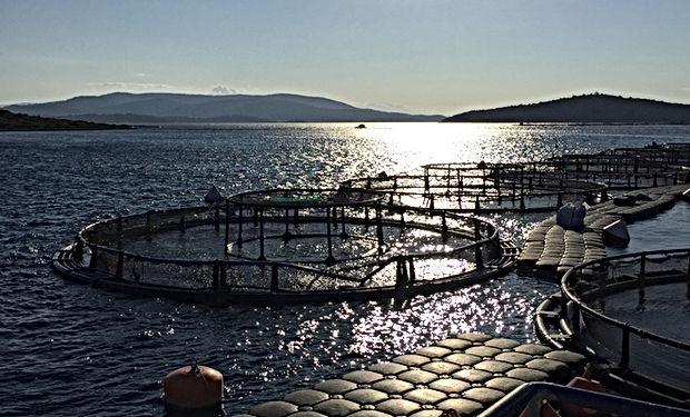 Petrolsec Fish Farming Security