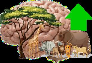 Episode 8- Non-Aggression Principle and Animals