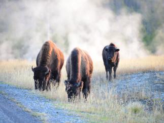 26 - 28 September 2015 Wyoming - Yellowstone