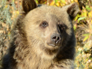 29 September - 6 October 2015 - Wyoming - Cody