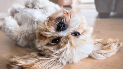 Nejčastější ALERGIE – NESNÁŠENLIVOST – INTOLERANCE u psů a koček