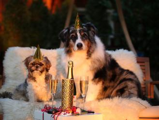 Nástrahy vánočních svátků a Silvestra