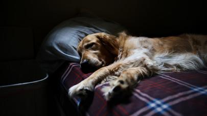 Akutní zánět slinivky psů a koček