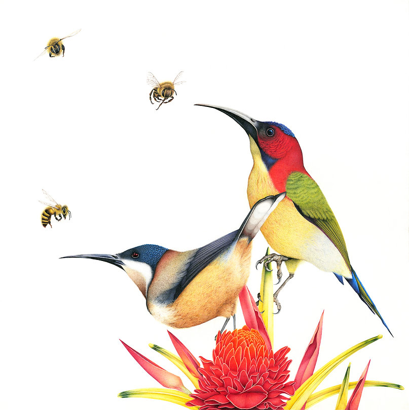 Bee eater and honeybee fine art drawing by Darren Hughes