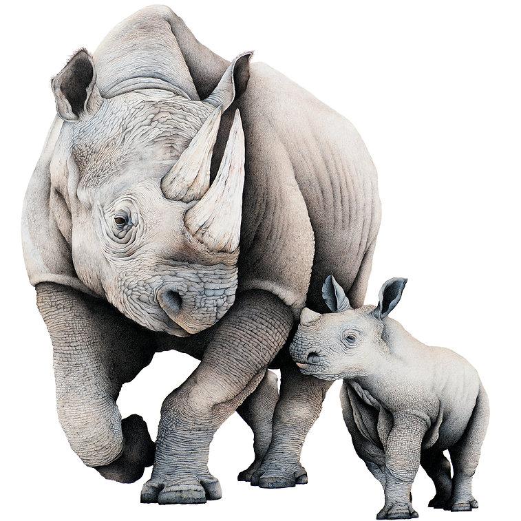 darren-hughes-art-rhino-mother-baby-home