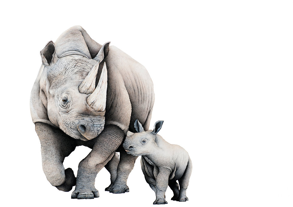 Mother and calf black rhino fine art drawing by Darren Hughes