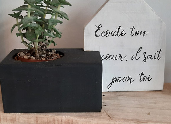 Cube plante avec Maison Phrase Blanche avec plante