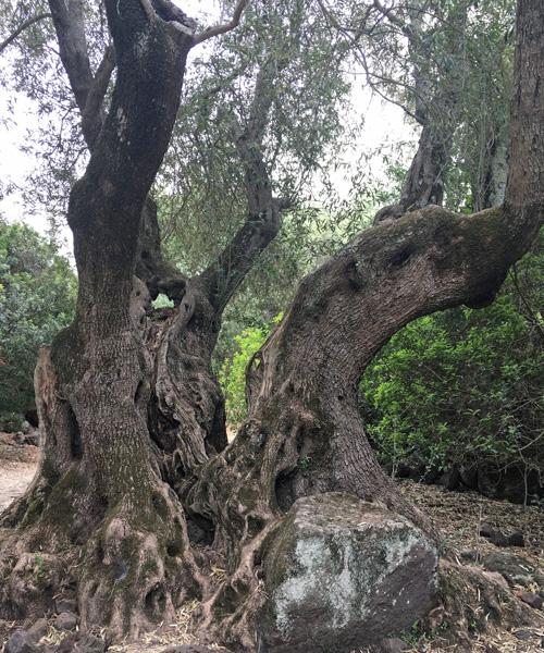 何百年経った木なんだろ。。。
