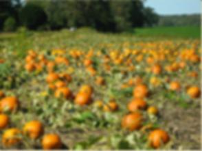 Pumpkin Hindman.png