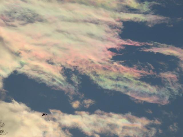 もぐの森の雲