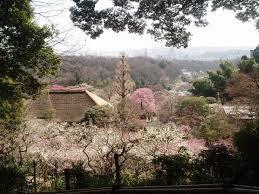 春の百草園