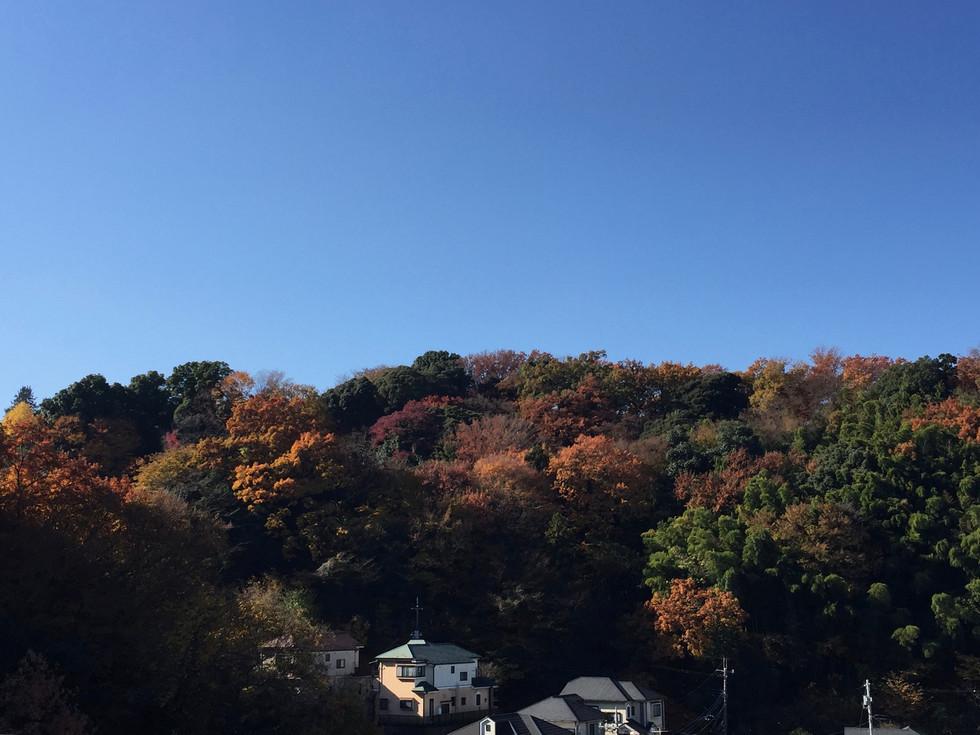 もぐの森の紅葉