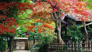 百草園の紅葉