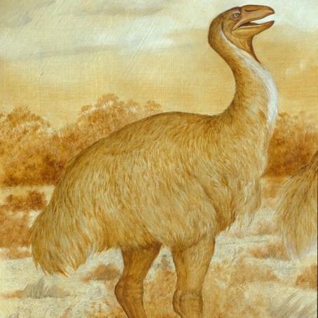 THE BIG DEAD BIRDS OF AUSTRALIA