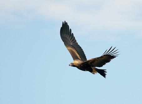 AUSTRALIA'S BIRDS ARE EMBEDDED WITHIN ABORIGINAL AUSTRALIAN CULTURE