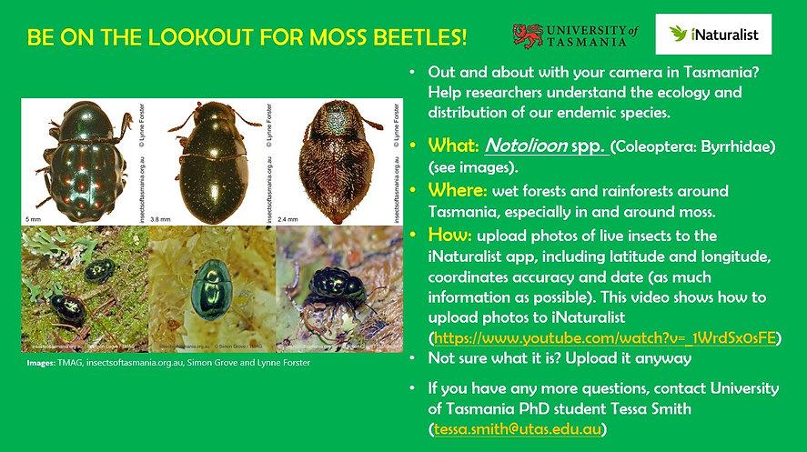 moss_beetles_advertisment.jpg