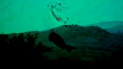 Screen Shot 2015-02-18 at 10.56.58.png