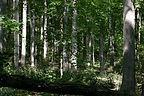 BRB_Woods.jpg