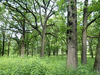 William's Woods.jpg