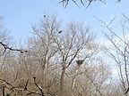 Eagles-Nest-Hewitt-2013.jpg