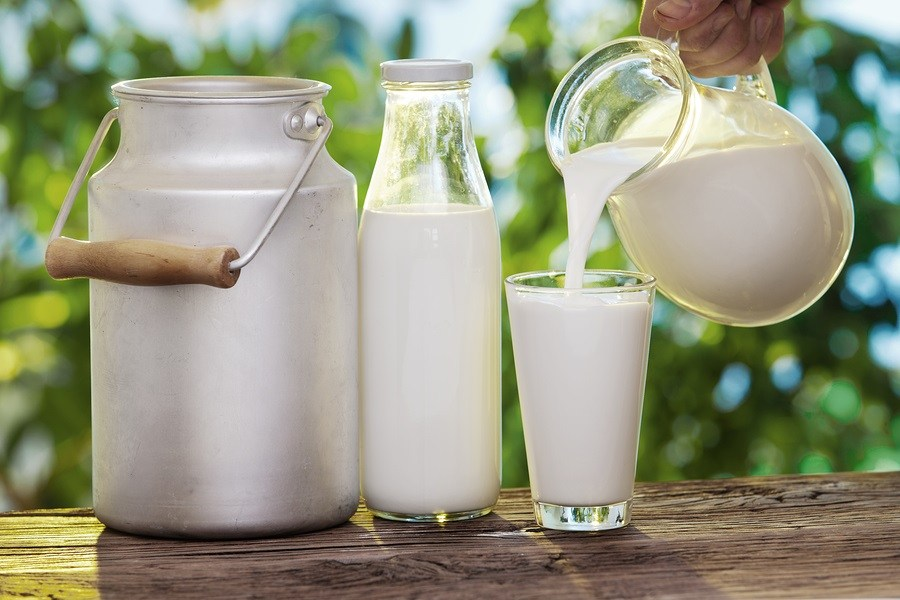 Keeping Raw Milk Safe - A Dairyman's Charge