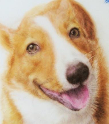 愛犬に贈りもの