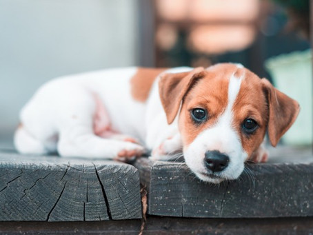 CREATE AN EVACUATION PLAN FOR YOUR PETS :