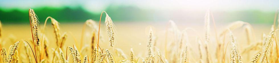 agricultureHeader.jpg